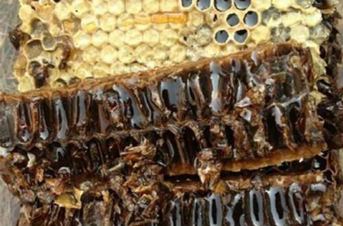 蜂胶十大品牌,哪种品牌的蜂胶效果最好?