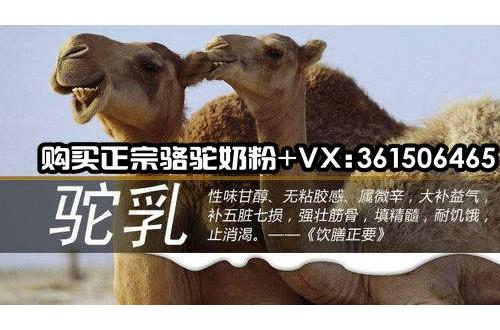 哪个牌子的骆驼奶粉好?喝骆驼奶粉有什么功效?