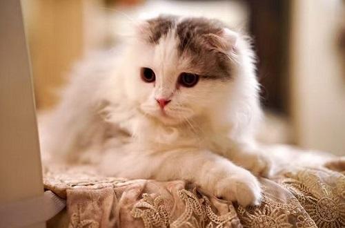 猫粮哪个好,热门的猫粮品牌有哪些